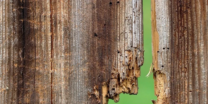 how to seal rotting wood